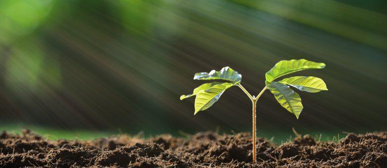 Pflanzealternativ