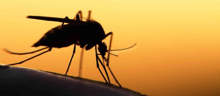 Malariaphropylaxe in Ehrwald Praxis Dr. Kewitz